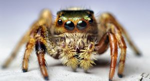 "Meet Kim, The World's First ""Pet"" Spider That Jumps On Demand"